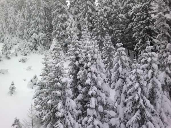 elki-v-snegu-na-gorychkovoj-trasse