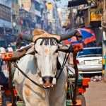 delhi_die_hauptstadt_indiens_291dd91dcd