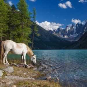 Пеший поход к Нижнему Шавлинскому озеру (Алтай)