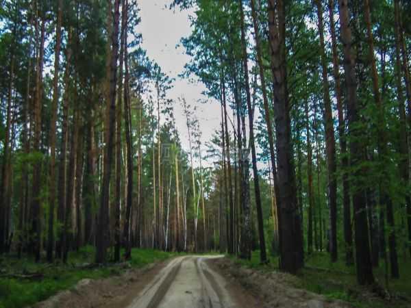 Вынужденное путешествие по дорогам Томского района