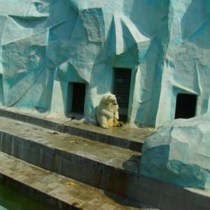 Летом 2010-го в Новосибирском зоопарке