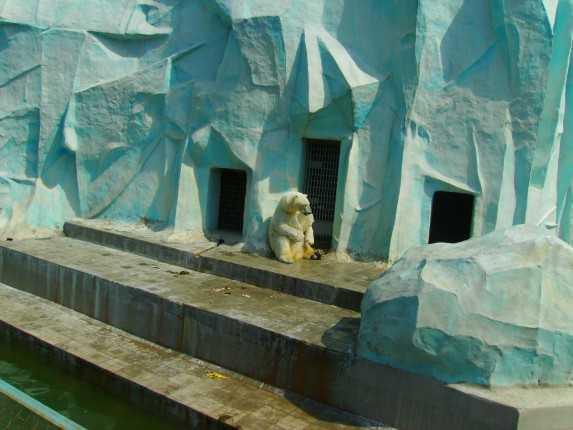 медведь новосибирский зоопарк
