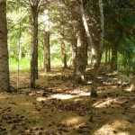 Омичам штраф до 500 000 рублей за посещение лесов