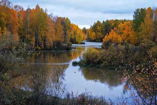 река тара омская область