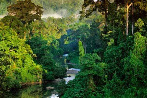 малайзия леса