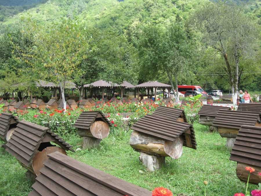Абхазия, пасека
