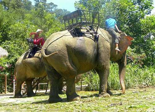 park-prenn-dalat-vietnam