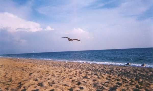 Каламитский залив — самая чистая часть Чёрного моря