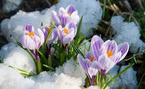 Как удивить любимую на 8 марта