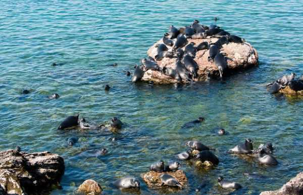 отдых в Чивыркуйском заливе