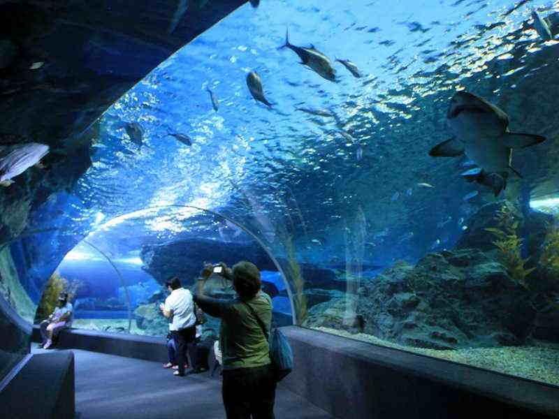 Okeanarium-v-Pattaye
