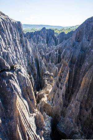 каменные леса Цинги