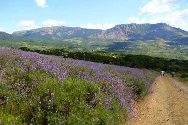 Экскурсия на Лавандовые поля Алушты