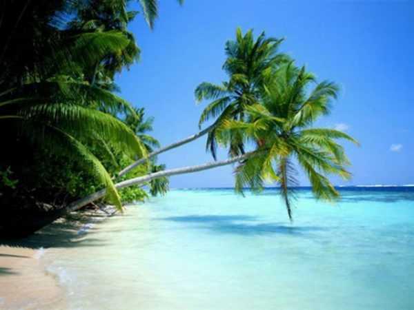 Отзывы об отдыхе в Доминикане