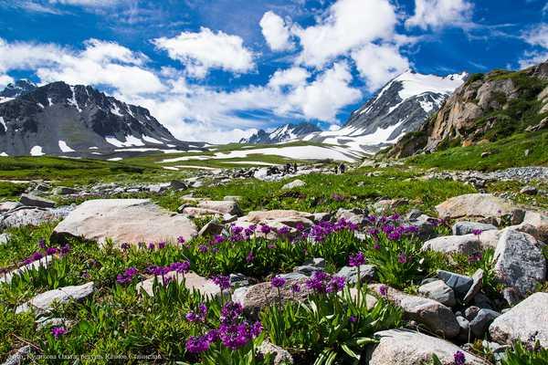 Поездка на Алтай. Тур Актру – Чемал - Телецкое озеро
