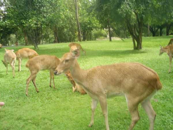 Накормить тапиров, бинтуронгов, жирафов - как исполнить все свои детские мечты!