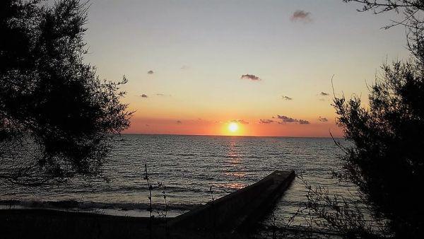 Поселок Песчаное под соснами в Крыму. Отзыв об отдыхе
