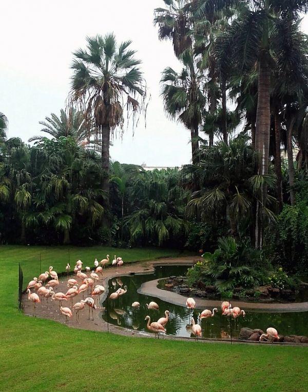 Лоро-парк на Тенерифе