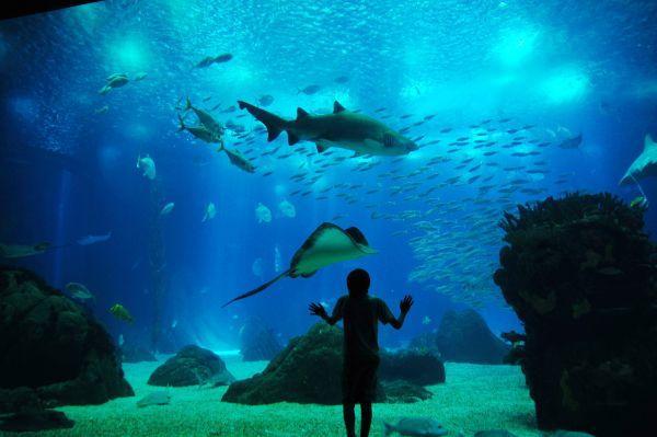 Океанариум в Лиссабоне - увлекательное путешествие в морской мир