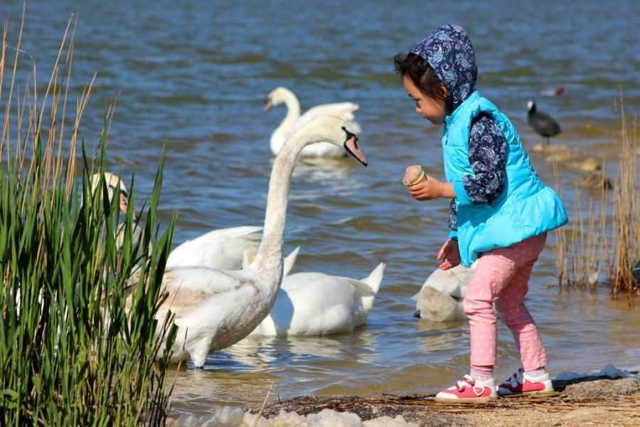 Лебединое озеро - это не только Чайковский, но и Сасык-Сиваш