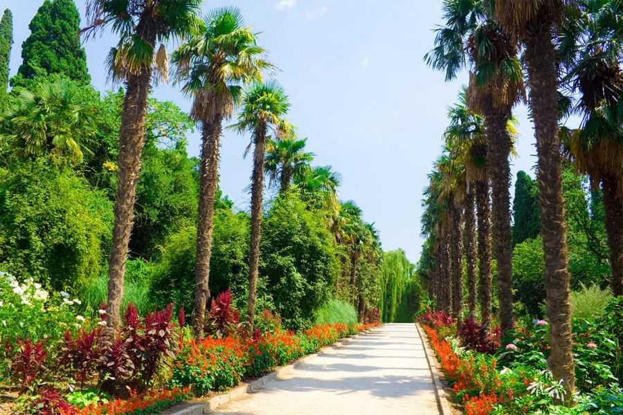 Крым. Ялта. Никитский ботанический сад
