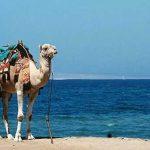 Египет не сомневается в возвращении россиян на свои курорты
