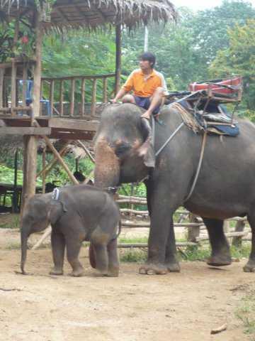 Тайланд в январе. Три лица Страны Улыбок.