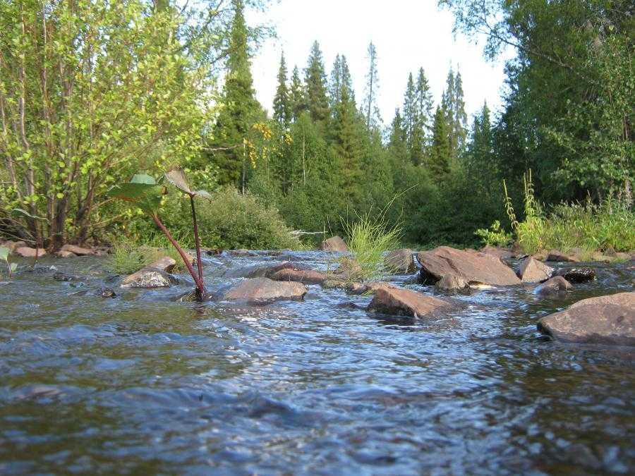 Река Цага