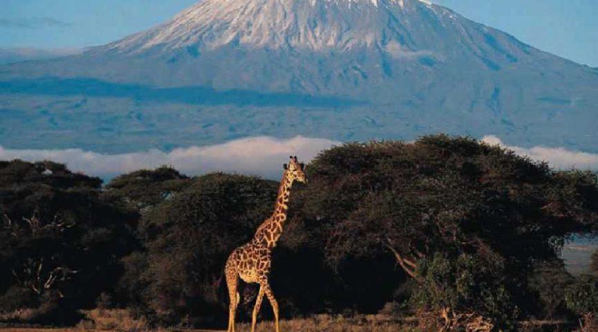 Гора Килиманджаро в Танзании. Подъем на Килиманджаро, когда ехать