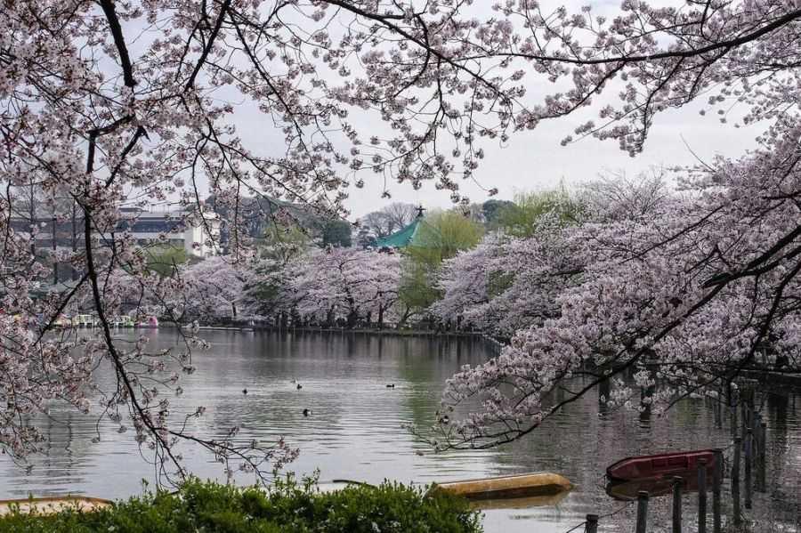 20 непривычных для нас особенностей жизни Японии