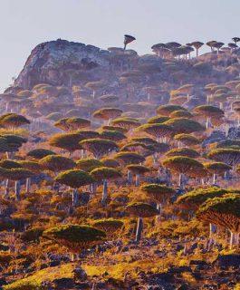 Остров Сокотра. Уголок с неземной природой и космическими видами